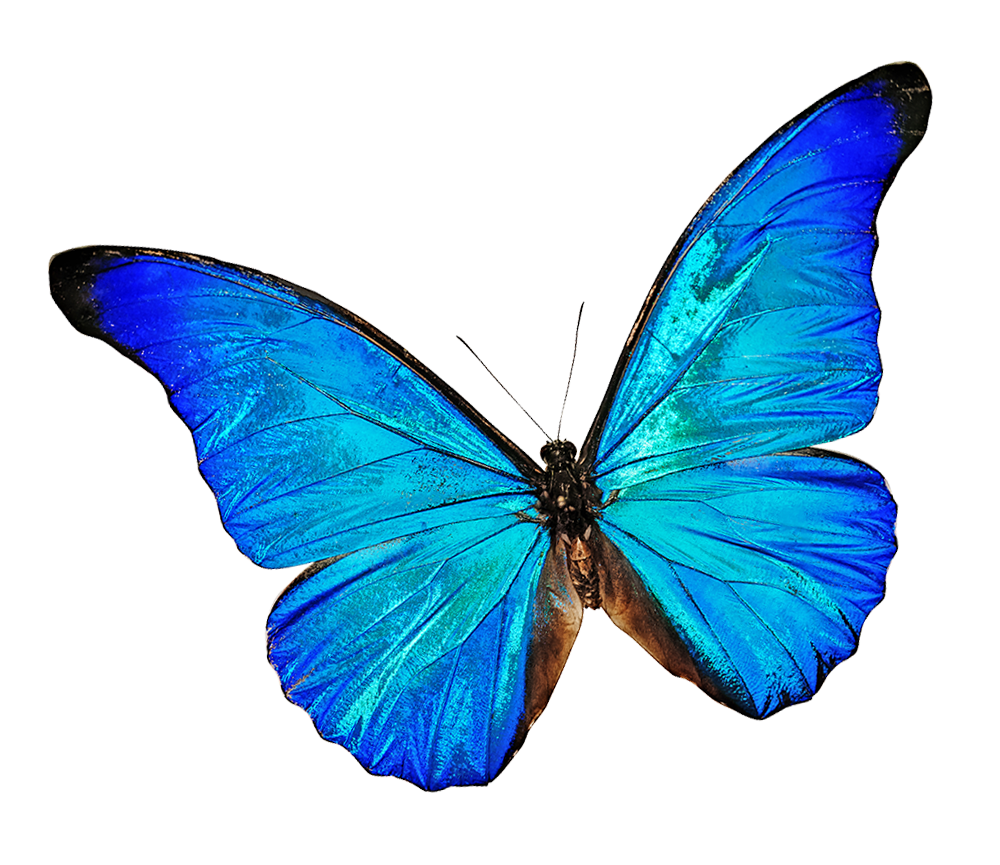 facials-blue butterfly-tilt