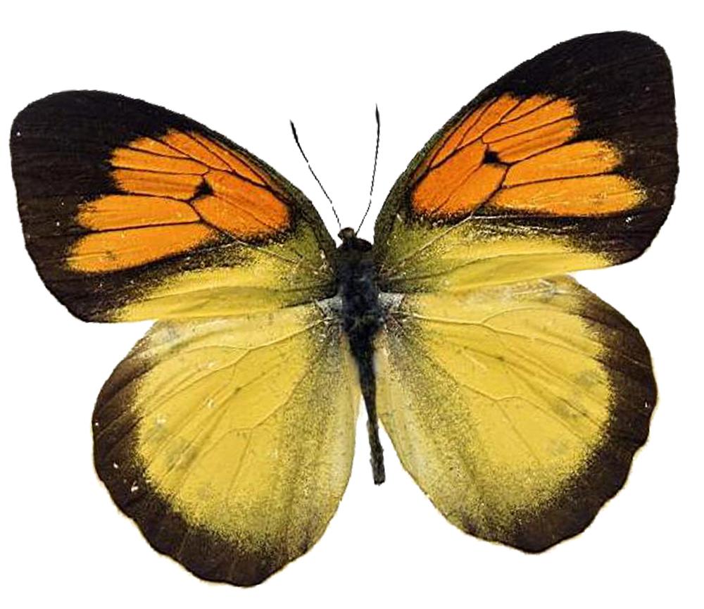 skin peels houston texas butterfly
