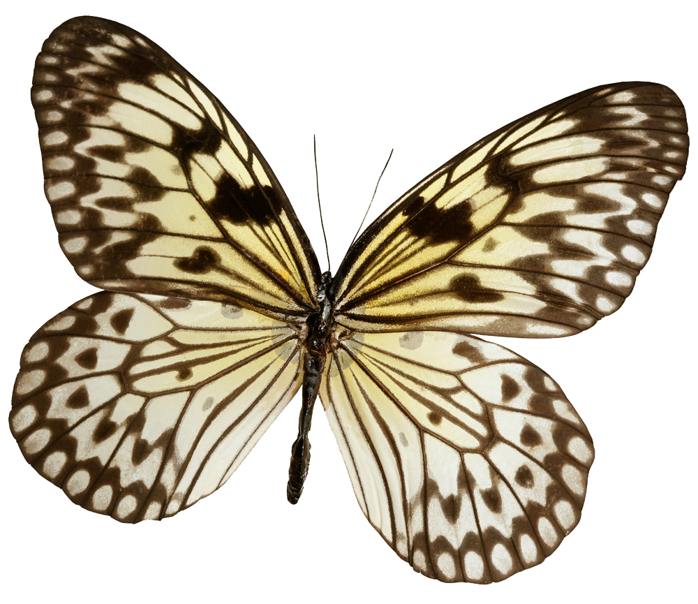Spring Houston Texas Butterfly Medspa